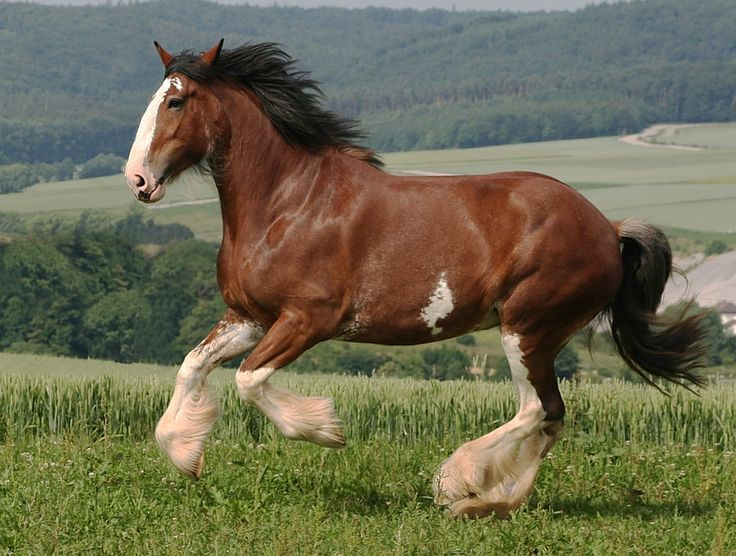 Clydesdales On The Tracks Event Slated For Oct 4