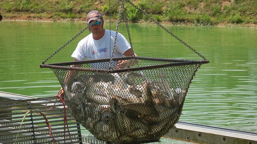 Auburn University to host 'Aquaculture/Aquaponics 101